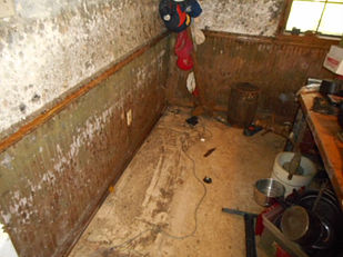 Mold Growth-Basement