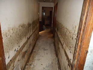 Mold Growth-Water Damage
